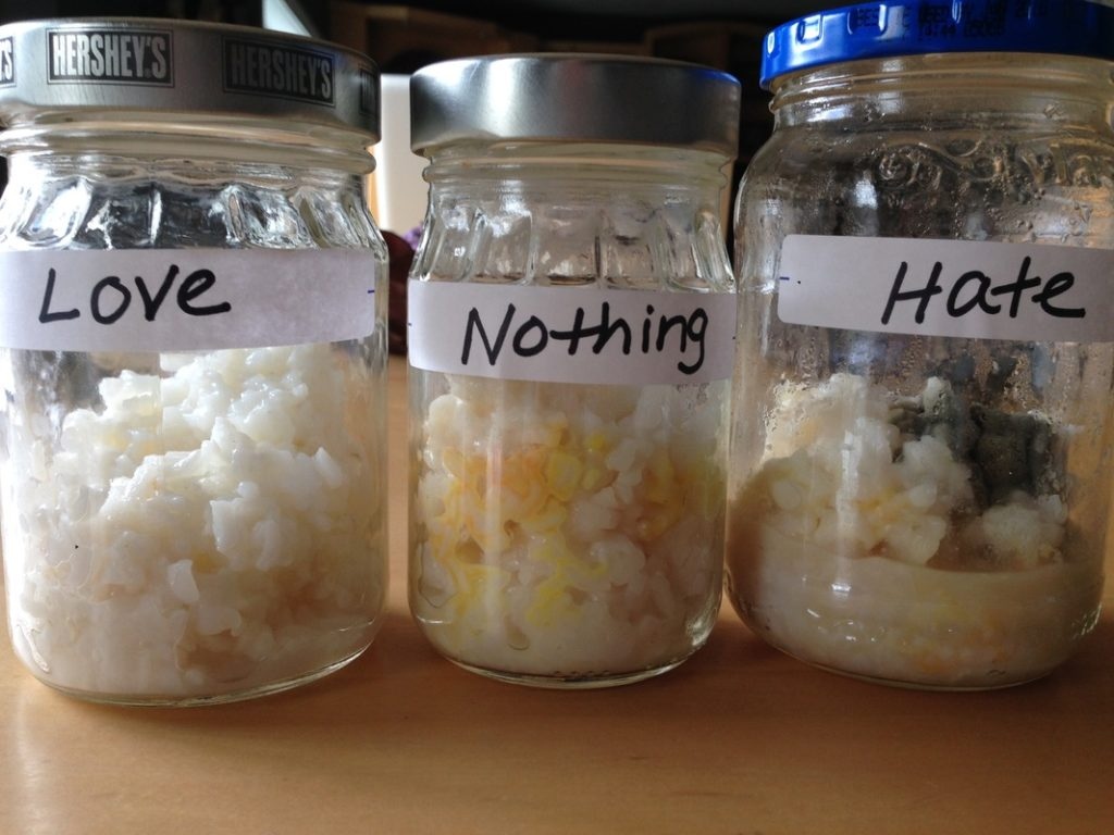 Dr. Emoto rice experiment Love, Nothing, Hate Rice Experiment
